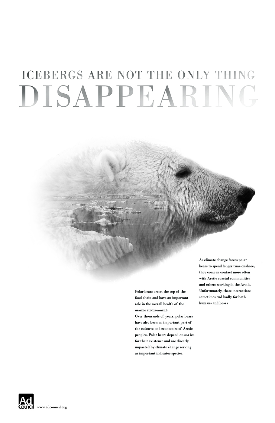 polarbearpro